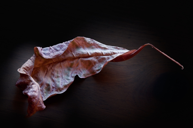 Convolution: Croton Leaf