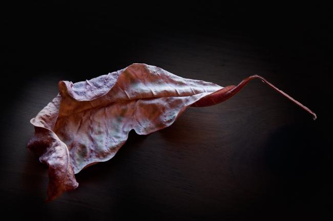 Convolution: Croton Leaf