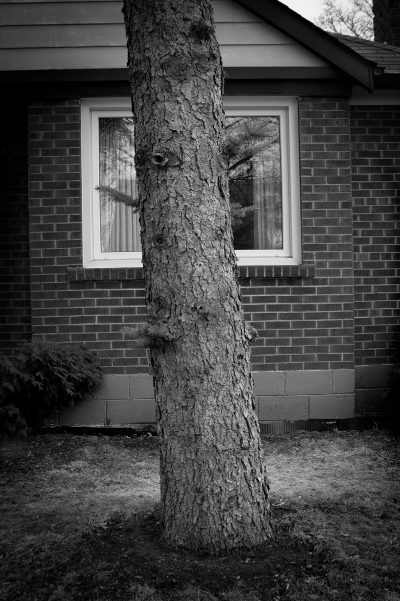 Window view blocked by large tree trunk.