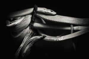 Snakes on a Stick